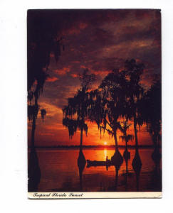 Tropical Sunset Florida   Postcard x0001 (Image1)
