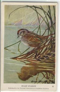 Swamp Sparrow Postcard x0063 (Image1)