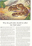 The Travelers Puff Adder Ad