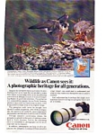 Click here to enlarge image and see more about item auc1613: Canon F 1 Wildlife Peregrine Falcon auc1613