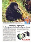 Click here to enlarge image and see more about item auc1615: Canon F 1 Wildlife Mountain Gorilla Ad auc1615
