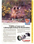 Click here to enlarge image and see more about item auc1714: Canon Camera  Ad With Ferret