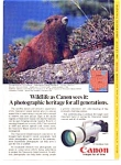 Click here to enlarge image and see more about item auc3212: Canon F-1 Wildlife Ad Vancouver Island Marmot