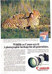 Click here to enlarge image and see more about item auc3520: Canon F 1 Wildlife Cheetah Ad auc3520 April 1983