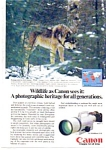 Click here to enlarge image and see more about item auc3521: Canon F-1 Wildlife Wolf Ad Dec 1983
