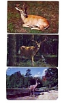Deer Whitetail Postcards Lot of 3 auc3532