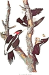 Click here to enlarge image and see more about item b0138: Bird Prints Audubon Style Lot b0138