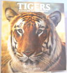 Click here to enlarge image and see more about item b2842: Tigers  A Look into the Glittering Eye Server (1992, Hardcover) b2842