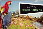 Click here to enlarge image and see more about item bk0207: Your Visit to Busch Gardens