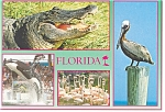 Florida Nature's Paradise Postcard