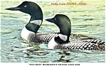 Click here to enlarge image and see more about item cs0218: The Loon Minnesota State Bird Postcard
