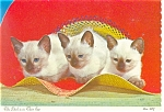 Click here to enlarge image and see more about item cs0238: Three Siamese Kittens in Hat Postcard