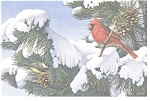 Northern Cardinal Black Capped Chickadee Postcard cs0246