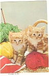 Click here to enlarge image and see more about item cs0248: A Couple of Kittens at Play Postcard cs0248