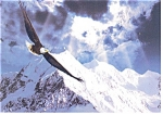 Soaring Eagle Postcard