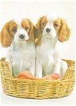 Two Pups in a Basket  Postcard cs0254