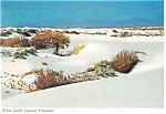 White Sands National Monument NM Postcard cs0374