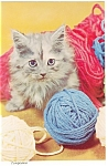 Click here to enlarge image and see more about item cs0442: Cat Eying a Ball of Yarn Postcard