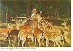 Click here to enlarge image and see more about item cs0444: Deer at Marineland,Niagara Falls Postcard cs0444