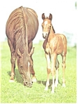 Click here to enlarge image and see more about item cs0446: Mare and Foal Postcard cs0446