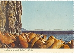 Click here to enlarge image and see more about item cs0463: Walrus on Round Island, Alaska Postcard 1970