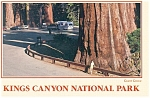 Click here to enlarge image and see more about item cs0512: Kings Canyon National Park CA Grant Grove Postcard cs0512