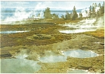 Geyser BasinYellowstone National Park WY Postcard cs0656 1987