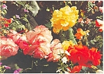 Click here to enlarge image and see more about item cs0734: Butchart Gardens Victoria BC Canada Postcard cs0734