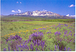 Mountains and Meadows Scene Postcard 1991