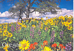 Oregon Spring Flowers Postcard cs0987 1993