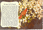 Click here to enlarge image and see more about item cs1020: Legend of the Dogwood Postcard