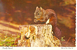 Click here to enlarge image and see more about item cs1027: Friendly Squirrel Postcard