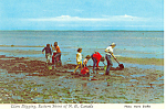 Click here to enlarge image and see more about item cs1056: Clam Digging, NB,Canada Postcard