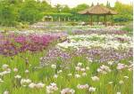 Click to view larger image of Wildflowers in Japan cs11049 (Image1)