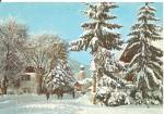German Christmas Postcard Snow Covered Pines cs11484