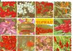 Click to view larger image of Flowers of Hawaii cs11760 (Image1)