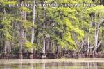 Click here to enlarge image and see more about item CS12859: Slidell Louisiana Wagners Honey Island Swamp Tours Postcard CS12859
