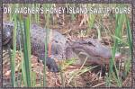 Click here to enlarge image and see more about item CS12872: Slidell Louisiana Wagners Honey Island Swamp Tours Postcard CS12872