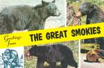 Click here to enlarge image and see more about item CS12884: American Black Bears in THe Great Smokies Postcard CS12884