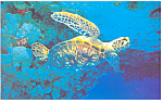 Click here to enlarge image and see more about item cs1303: Sea  Turtle Postcard