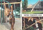 Click here to enlarge image and see more about item CS13628: Toronto Canada Metro Toronto Zoo Malayan Pavilion Postcard CS13627