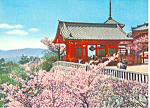 Click here to enlarge image and see more about item cs1394: Cherry Blossoms in Japan Postcard cs1394