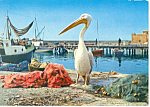 Click here to enlarge image and see more about item cs1455: Pelican Paphos Cyprus Postcard cs1455