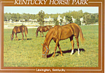 Kentucky Horse Park Lexington KY Postcard cs1484