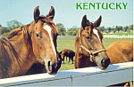 Click here to enlarge image and see more about item cs1500: Horses in The Blugrass State Postcard cs1500
