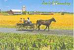 Amish Horse and Buggy Postcard cs1558