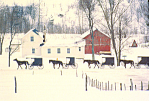 Amish Farm Yard in Winter Postcard cs1568