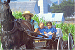 Amish Father and Daughters in Open Buggy  Postcard