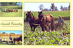 Scenes of Amish Farms  Postcard cs1574