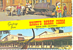 Buena Park CA  Knotts Berry Farm Postcard cs1666